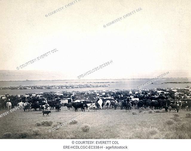 Round-up at Moss Agate, Dakota Territory. photo by John C. Grabill, 1887