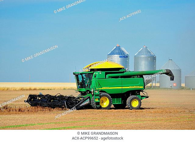 Lentil harvest. Combine and grain bins Land Saskatchewan Canada