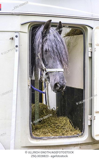 A white horse looks out of the window of a horse dolly