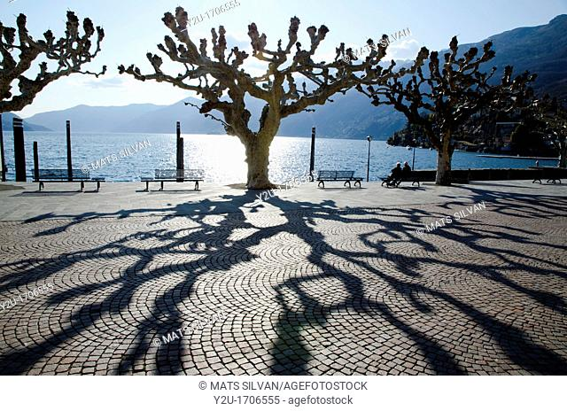 Trees and shadows with benches on the lake front with mountains
