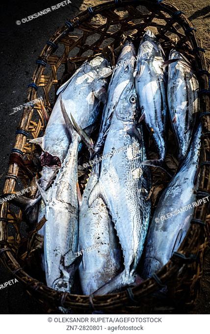 Tuna in a basket, Nungwi fishmarket, Zanzibar, Tanzania