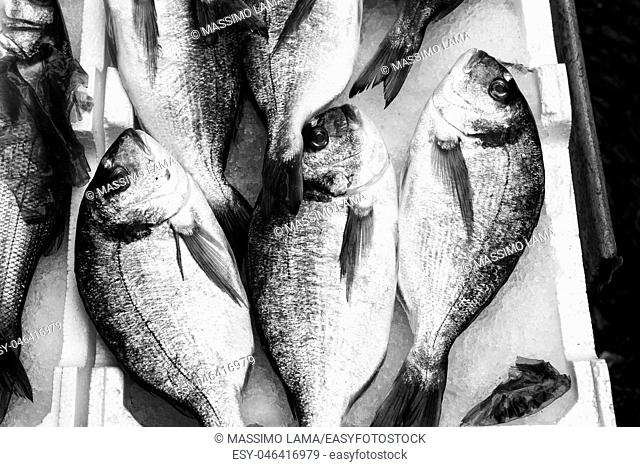 Mediterranean fish exposed