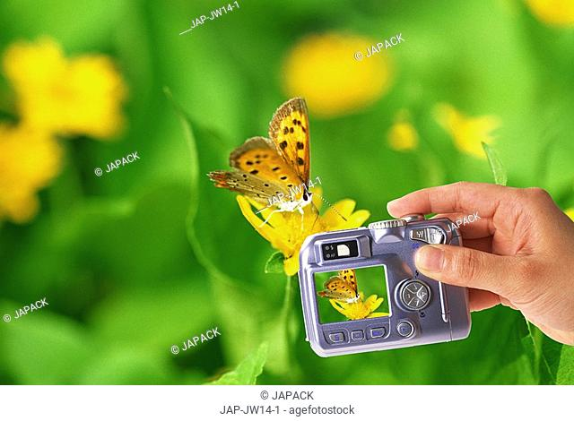 Taking a photo of a butterfly with a digital camera, composite image