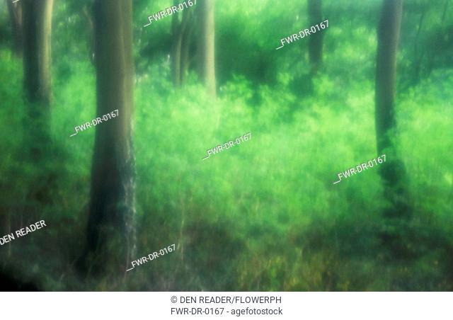 Fagus sylvatica, Beech, Green subject