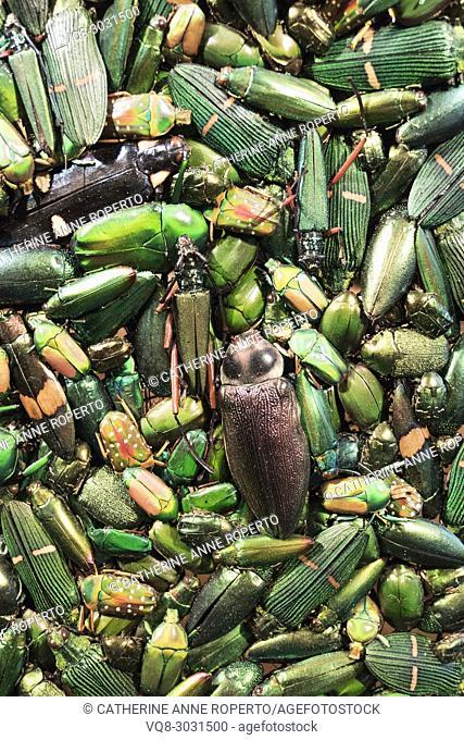 Costume exhibit detail of scintillating jewel like green beetles in the Museum of Flanders, Cassel, France