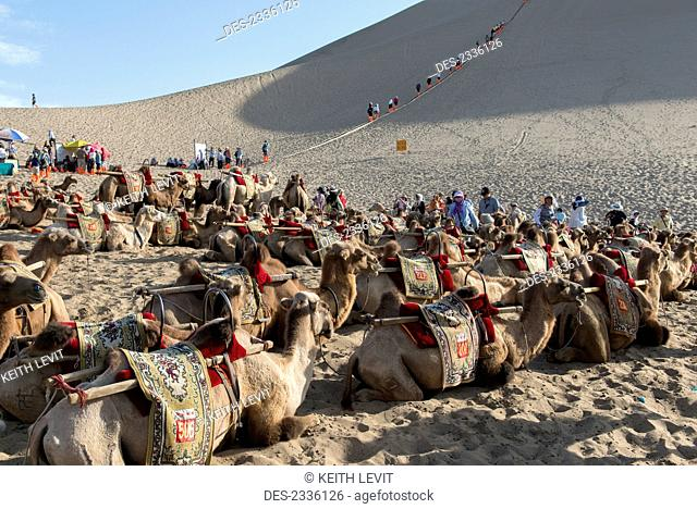 Tourists and camels at the bottom of Singing Sand mountain; Jiuquan, Gansu, China