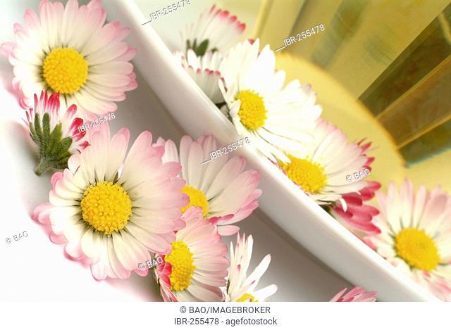 Herb tea made of Bellis perennis, daisy