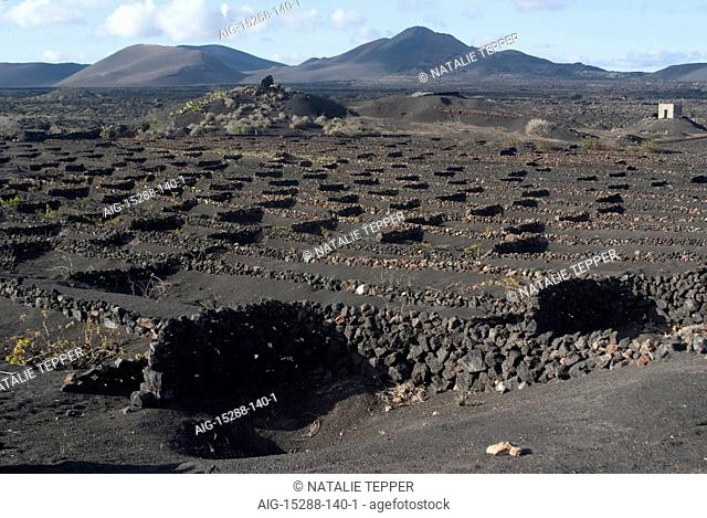 The wine growing district of La Geria, a protected landscape of Lanzarote, Spain