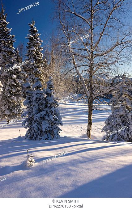 A fresh blanket of snow coats the spruce forest behind the anchorage golf course with chugach mountains in winter;Anchorage alaska united states of america