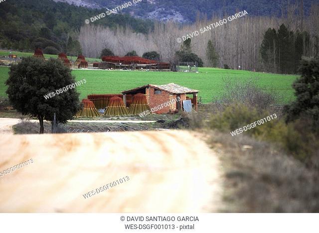 Spain, Cuenca, wicker harvest in Canamares in autumn