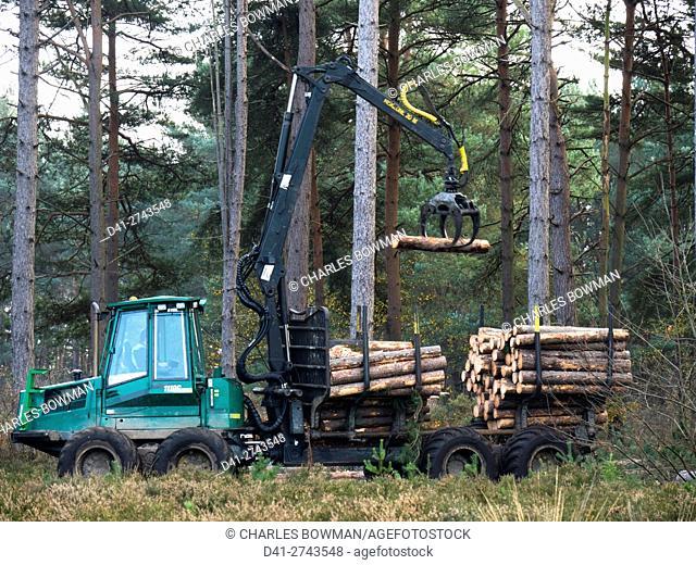 UK, England, Surrey, Forest pines logging