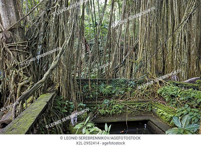 Holy Spring Bathing Pool in the Sacred Monkey Forest Sanctuary. Ubud, Bali, Indonesia