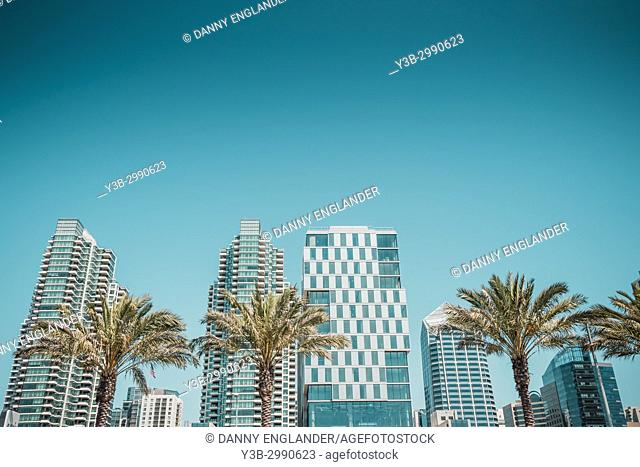 Palm trees and buildings in downtown San Diego, California