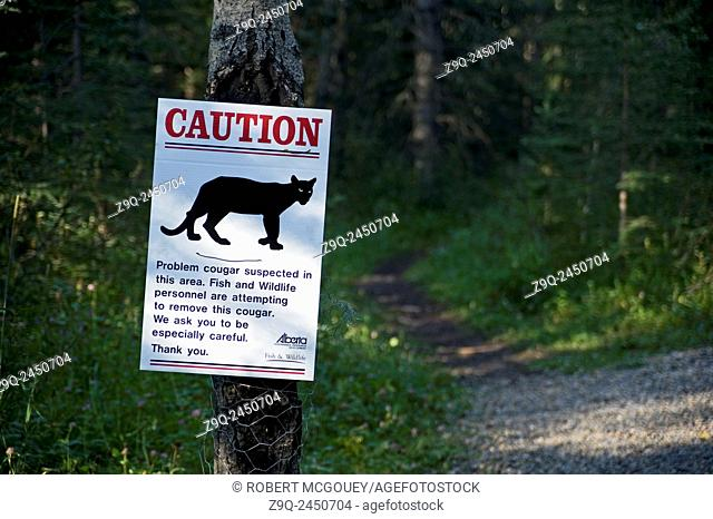 sign on a wooded remote hiking trail warning hikers of a wild cougar in the area. Alberta. Canada