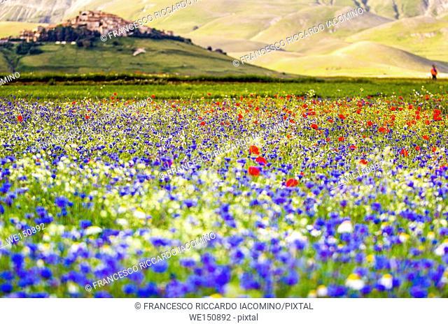Castelluccio di Norcia, Umbria, Italy. Piana Grande Valley landscape full of flowers