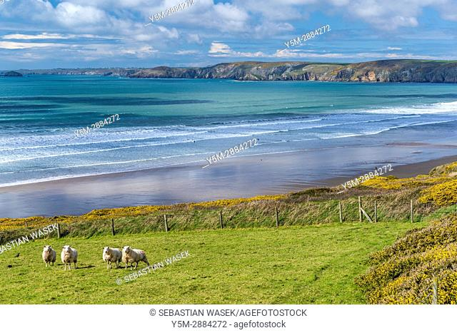 Newgale Sands, Pembrokeshire Coast National Park, Pembrokeshire, Wales, United Kingdom, Europe