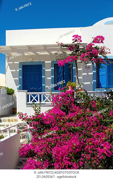 white house with purple bougainvillae at santorini at greece
