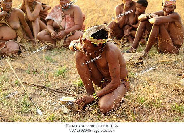 Bushman or san showing how to draw water from a desert tuber. Tsumkwe, Otjozondjupa, Kalahari, Namibia