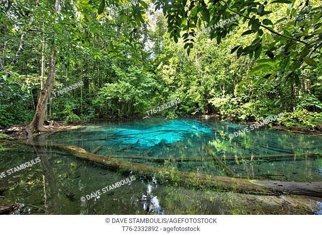 The Blue Crystal pool at the Sa Morakot Emerald Pool in Krabi, Thailand