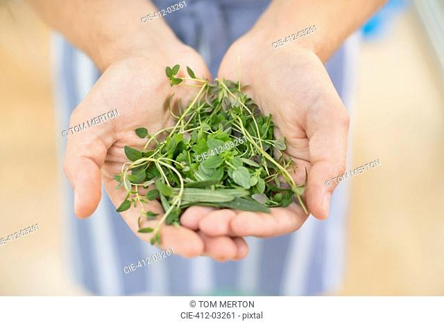 Hands holding bunch of herbs