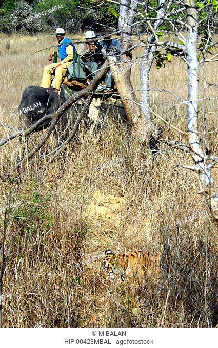 TOURISTS VIEWING ROYAL BENGAL TIGER IN KANHA NATIONAL PARK, MADHYA PRADESH