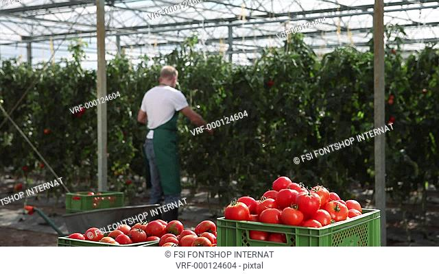 MS, Lockdown, woman and man working in a greenhouse