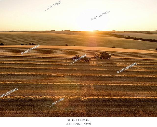 Harvest aerial of combine harvester cutting summer wheat field crop in sunset landscape light on farm