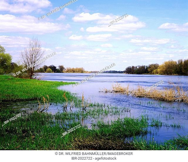 Elbe wetlands near Arneburg, Saxony-Anhalt, Germany, Europe