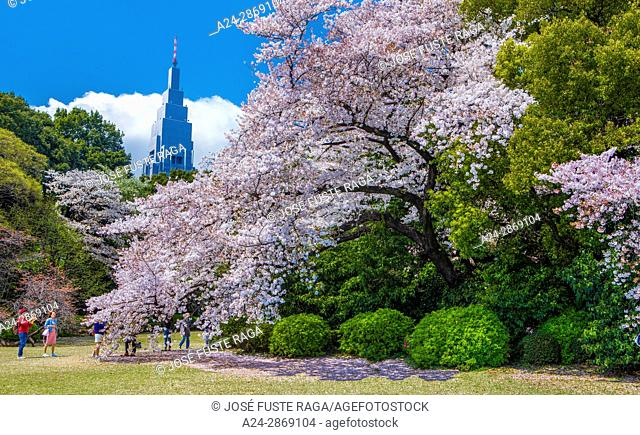 Japan, Tokyo city, Shinjuku district,Shinjuku Gyoen Park