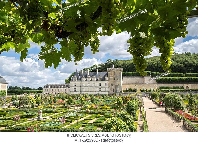 Villandry castle and its garden from under a grapevine. Villandry, Indre-et-Loire, France