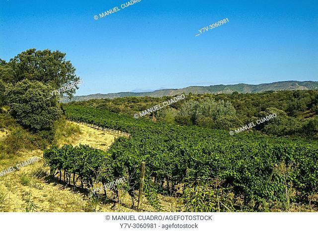 Bodega Viña del Vero - Blecua in Somontano, D.O. Somontano, Huesca province, Aragón, Spain