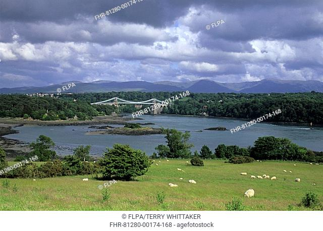 Wales - Menai suspension bridge with sheep grazing in foreground, from Anglesey