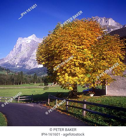 Autumn view of the Wetterhorn from the village of Grindelwald