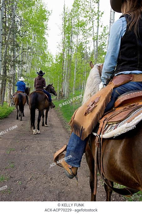 A group of riders make their way through a stand of Poplar trees at AP Guest Ranch, South of Merritt, Nicola Valley, Thompson Okanagan region, British Columbia