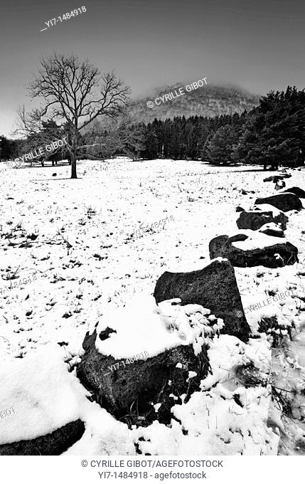 Winter landscape, Puy de Dôme, Auvergne, France