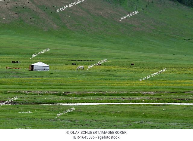Mongolian round tent, ger or yurt in lush green grass landscape with a small river near the Khuisiin Naiman Nuur Nature Reserve, Uyanga, Oevoerkhangai Aimak