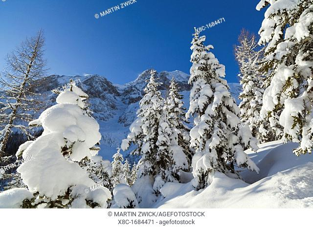 Valley Gaistal with snow during deep winter in Tyrol, Austria Mountain forest with snowed in trees with the Mieminger Crest and peak Hohe Munde as background...