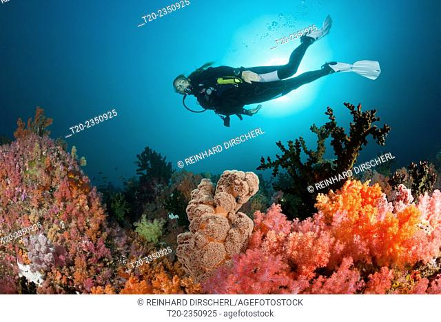 Scuba Diver and colored Coral Reef, Triton Bay, West Papua, Indonesia