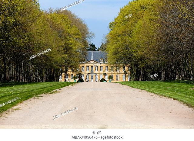 Tree avenue, castle Digoine, France