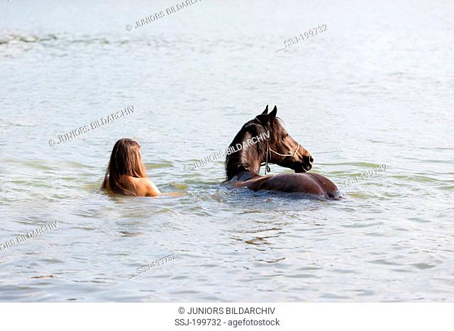 Welsh Cob. Woman with bay Welsh Pony swimming in a lake. Germany