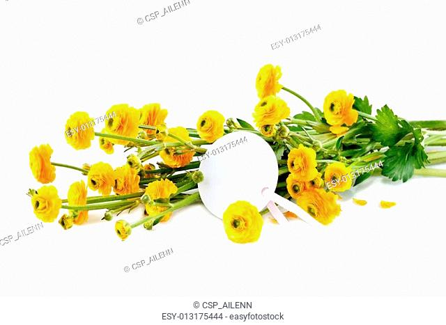 yellow buttercup flowers on white background
