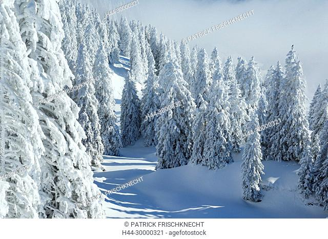 Verschneiter Tannenwald, Schweiz