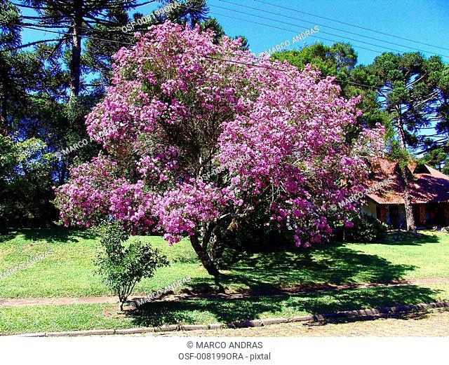 purple flowers plants vegetation of a bothanical garden