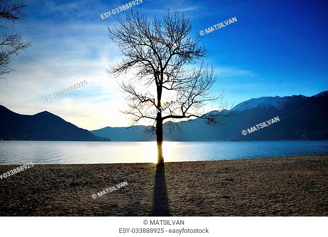 Sunlight over a lake with a tree and snow-capped mountains