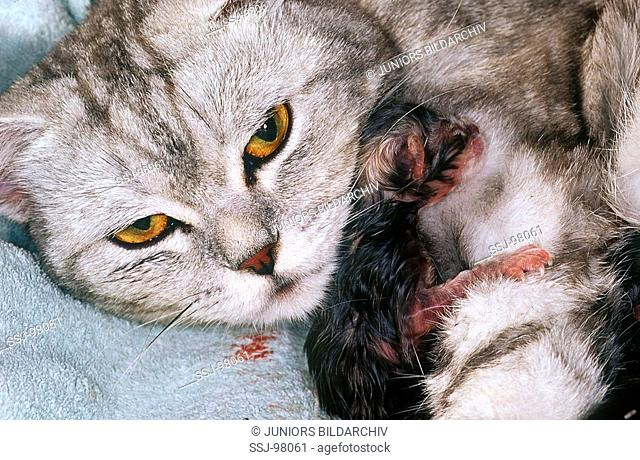 birth of cat