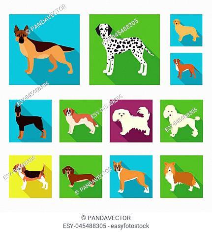 Dog breeds flat icons in set collection for design.Dog pet vector symbol stock illustration