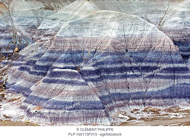 Striated mounds, cones, buttes and fins can be found in Blue Mesa. These color bands are the result of mineral presence and water levels at the time of...