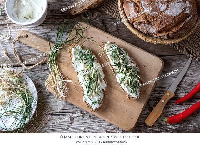 Sourdough bread with cottage cheese and wild edible plant allium vineale, or crow garlic