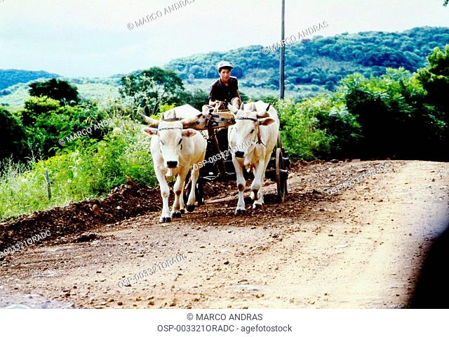 a man boy in a cart with two oxen