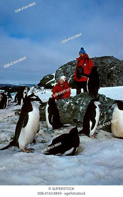 ANTARCTICA, NELSON ISLAND, SOUTH SHETLAND ISLANDS, TOURISTS WATCHING CHINSTRAP PENGUINS--RELEASE 43/44